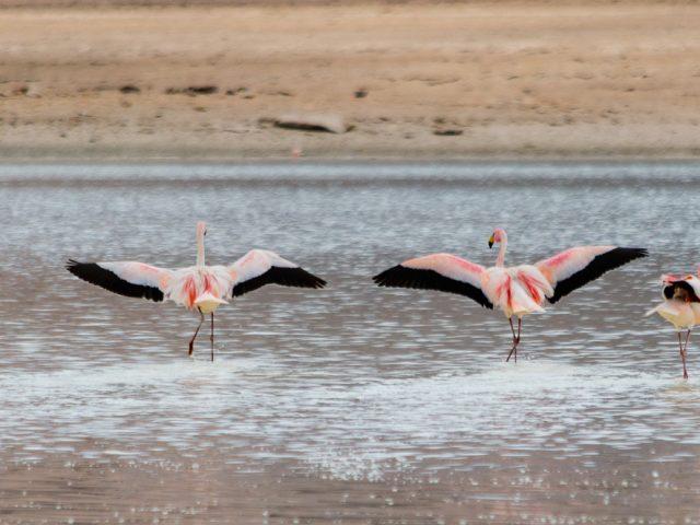 Bolivia: Along the lagoon route to the Salar de Uyuni