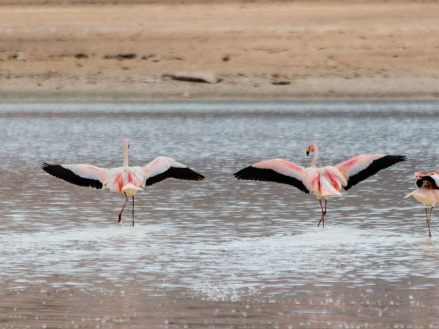 Bolivien: Entlang der Lagunenroute zum Salar de Uyuni