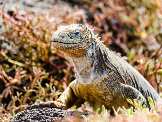 The Galapagos – sailing through paradise