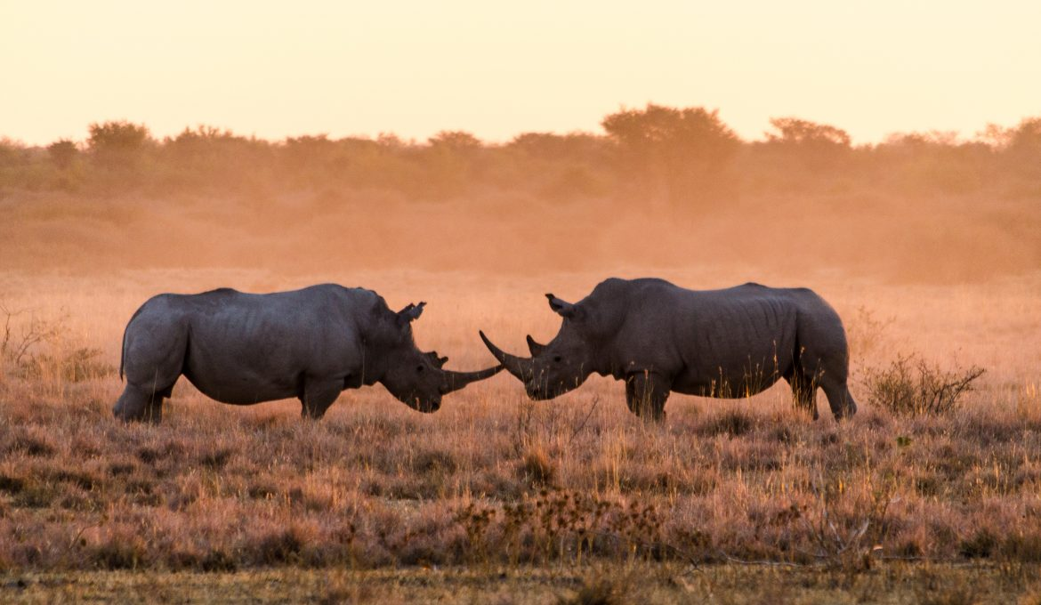 East Botswana – encounters of a very special kind