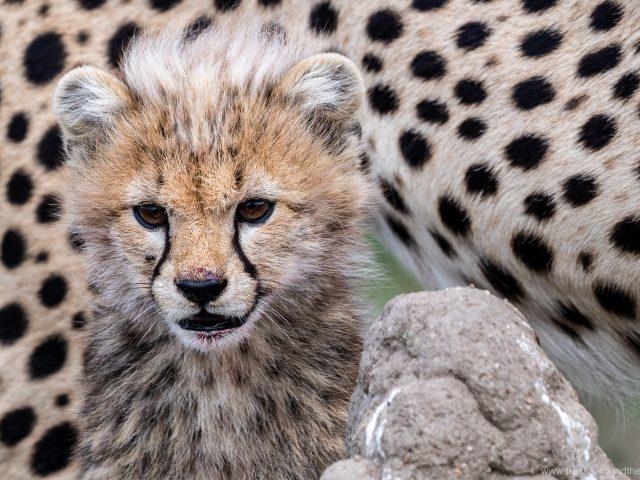 Tansanische Highlights: Usambara Berge, Ngorongoro Krater und Serengeti