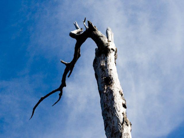 Carretera Austral: Traumstrasse mit Vulkanen, Gletschern, Wasserfällen und umgestürzten LKWs