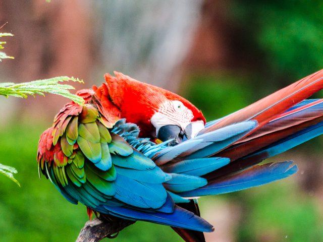 Abenteuer Pantanal…. und liebliches Bonito