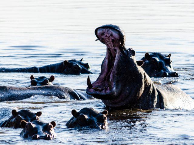 Der Caprivi-Streifen: Jederzeit hungrige Hippos und sattgrüne Flusslandschaften