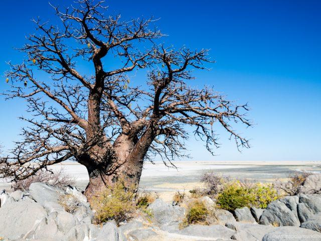 Durch die zentrale Kalahari und die Makgadikgadi-Pans